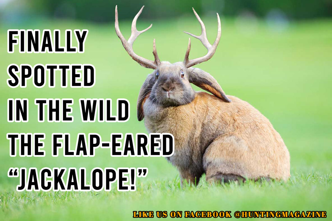 """Funny Deer Hunting Meme: Finally Spotted in the Wild the Elusive Flap-Eared """"Jackalope"""" in the Wild! 