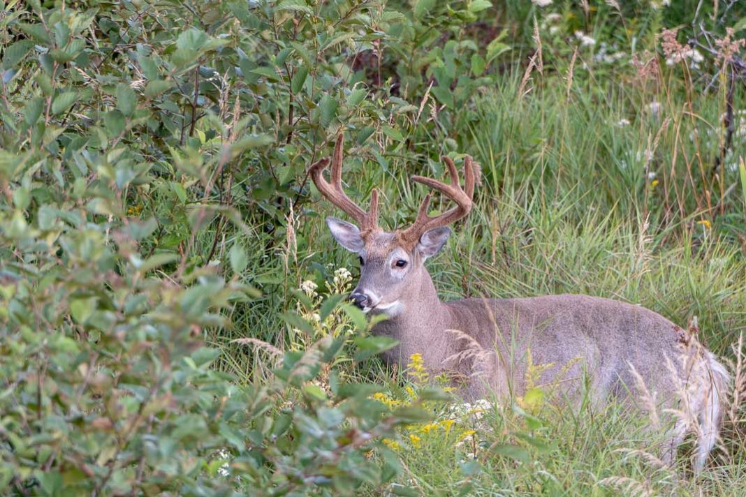 What to Look for in a Trail Camera | Hunting Magazine