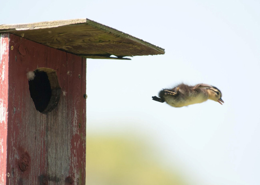 Dscover the best ways to make your nest boxes