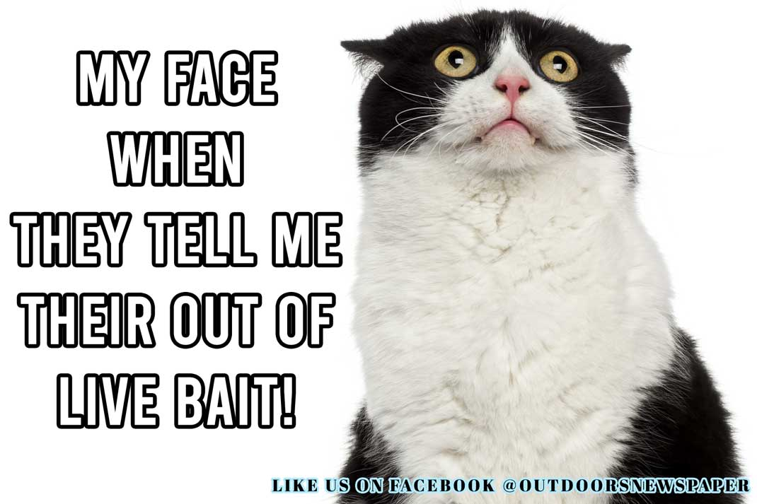 Fishing Meme: My Face When They Tell Me Their Out of Live Bait! - Outdoor Newspaper