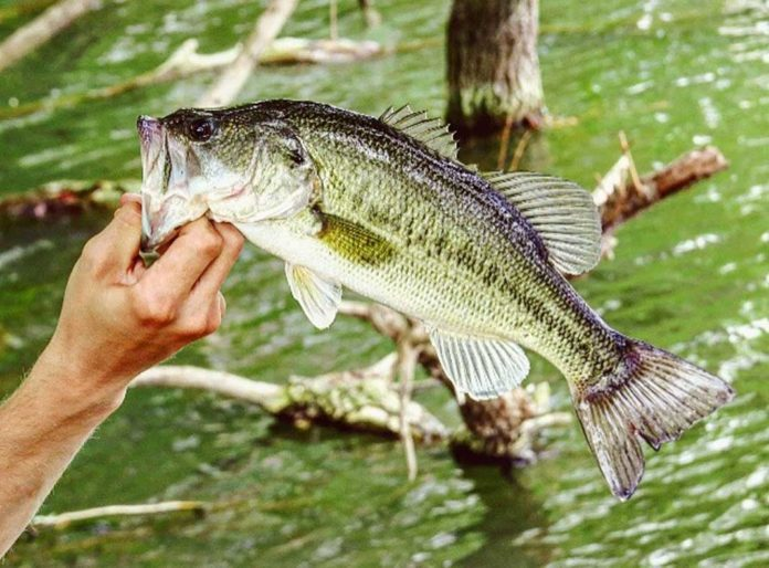 This Spring, It's all About That Bass Fishing -- and Your Basic Gear