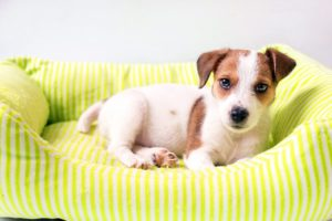 Your dog's bed may be where he feels most comfortable | Family Life Tips